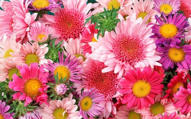daisies and mums